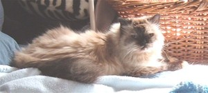 Sunny_cat