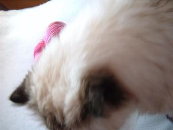 Cat_near_yarn