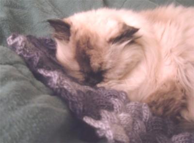 Kittyscarf